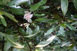 Rhododendron expansion may increase the chance of landslides on Southern Appalachian slopes