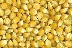 Sorter Detects and Removes Damaged Popcorn Kernels