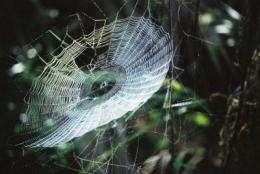 Spider web glue spins society toward new biobased adhesives