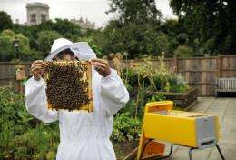 The number of honeybees in the UK has dropped by up to 15 percent in the past two years