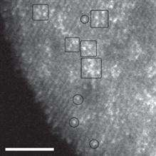 Imaging a catalyst one atom at a time