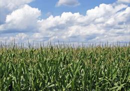 U.S. Crop Yields Could Wilt in Heat