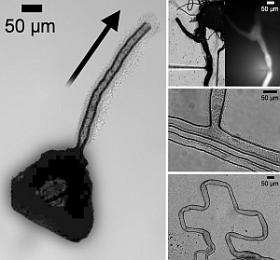 World first as scientists grow microtubes from crystals