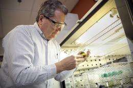 New lignin 'lite' switchgrass boosts biofuel yield by more than one-third