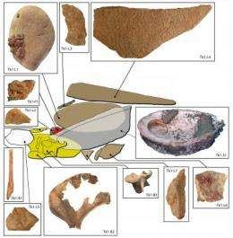 100,000-year-old ochre toolkit and workshop discovered in South Africa