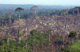 Aerial view of a burnt out sector of the Jamanxim National Forest in the Amazon state of Para, nothern Brazil