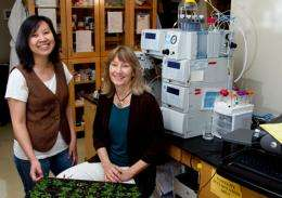 Discovery changes how scientists think about plant cell wall formation