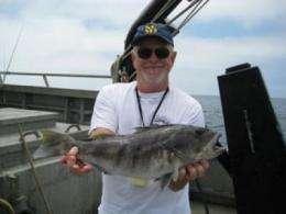 'Illusion of plenty' masking collapse of 2 key Southern California fisheries