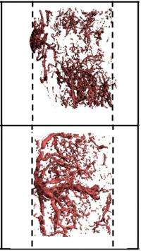 Mechanical stress can help or hinder wound healing depending on time of application