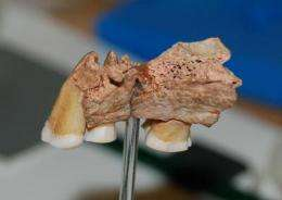 New evidence for the earliest modern humans in Europe