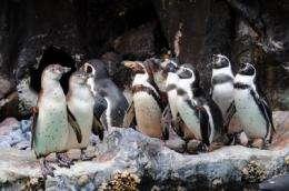 Smells may help birds find their homes, avoid inbreeding