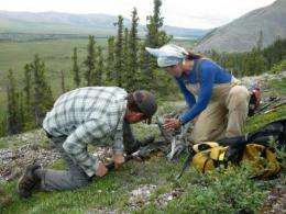 Trees on tundra's border are growing faster in a hotter climate