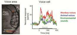 Voice cells for voice recognition
