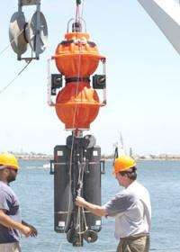 Researchers identify mysterious life forms in the extreme deep sea