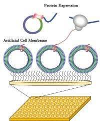 Plastic cell membranes for faster and cheaper drug development
