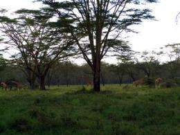 6 million years of savanna