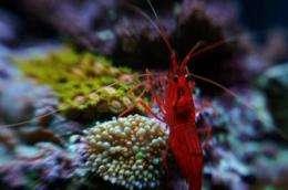 Captive breeding could transform the saltwater aquarium ...