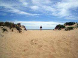 Conservation of coastal dunes is threatened by poorly designed infrastructure
