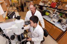 University of Georgia study finds that less is more for common cancer drug