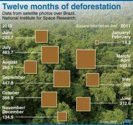 Graphic showing monthly deforestation in the Brazilian Amazon