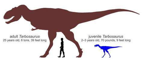 Immature skull led young tyrannosaurs to rely on speed, agility to catch prey