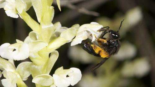 Why are orchids so successful?