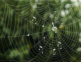 Researchers link patterns seen in spider silk, melodies