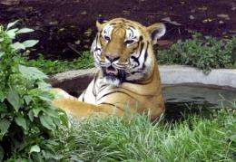 Scientists in Nepal are building a DNA database of Bengal tigers with a unique genetic fingerprint from their faeces