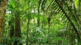 Palms as a model for rainforest evolution
