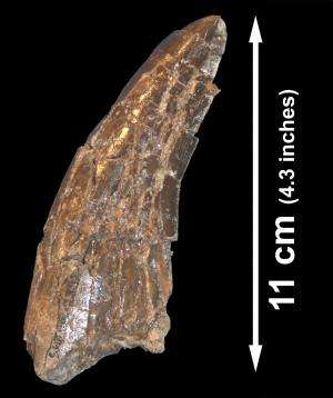 New study reveals North America's biggest dinosaur