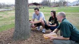 Researchers use trees to detect contaminants and health threats