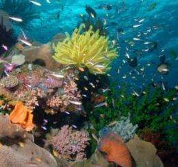 A coral reef brimming with life is seen in the Coral Sea off Australia's northeast coast