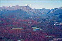 'Albedo effect' in forest disturbances can cause added warming, bonus cooling