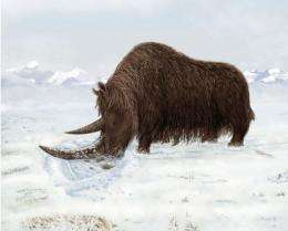 An artist's rendition of a woolly rhino using its horn to look for food