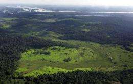 An overview of an area in the Amazon rain forest