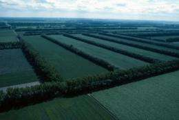 Assessing agroforestry's advantages