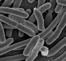 Bacteria may readily swap beneficial genes