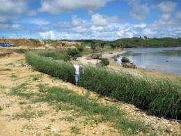 Bioengineering with vetiver grass on Guam