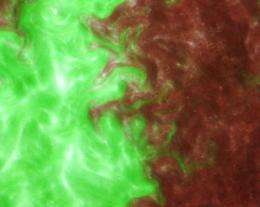 Biologists identify light-regulated mechanism in cyanobacteria as aid to optimizing photosynthesis