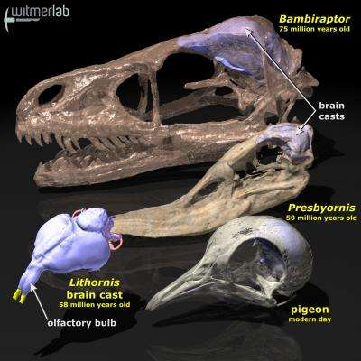 Birds inherited strong sense of smell from dinosaurs