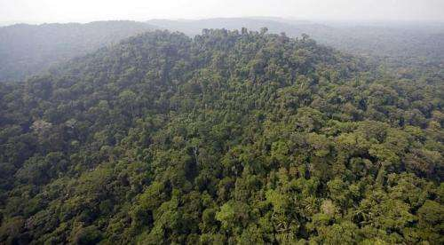 Brazil, the world's fifth largest country by area, has 5.3 million square kilometers of jungle and forests
