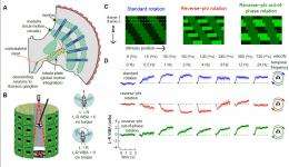 Ghosts in the machine: The neural basis of visual illusions in fruit flies