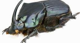 Beetlemania: The joy of dung