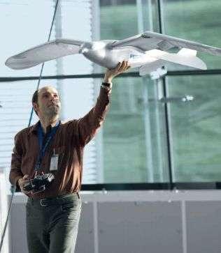 It's a bird, it's a plane, it's a robot bird