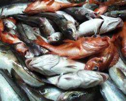Cod resurgence in Canadian waters