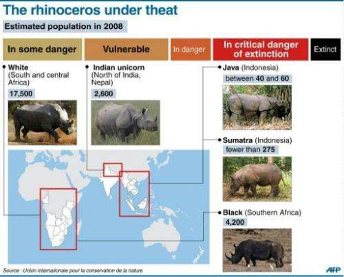 Degree of threat of extinction faced by five existing species of rhino