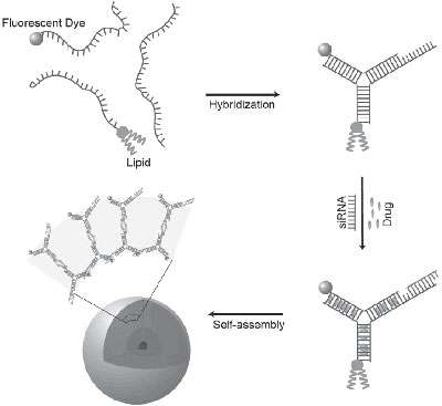DNA nanoparticles to carry drugs and gene therapy