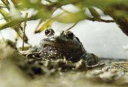 'Extinct' frog hops back into northern Israel (AP)