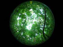 First rainforests arose when plants solved plumbing problem