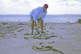 Fish kills trigger red tide alerts, first responders